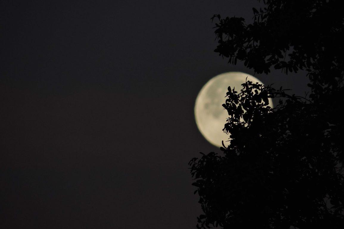 clar de lluna claudi planas font en pere altres contes literatura catalana català